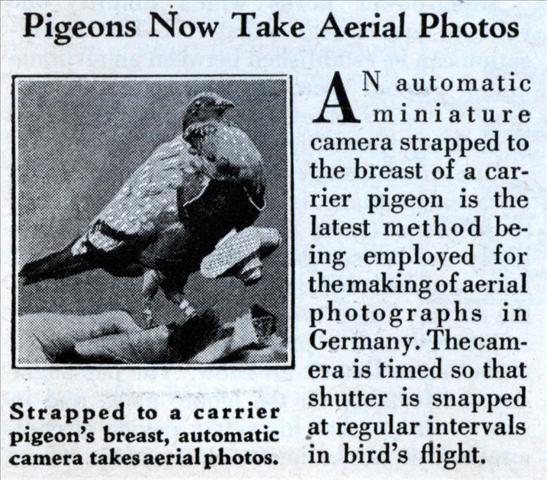 pigeon camera photographie aerienne 14 Des pigeons photographes pour la reconnaissance aérienne