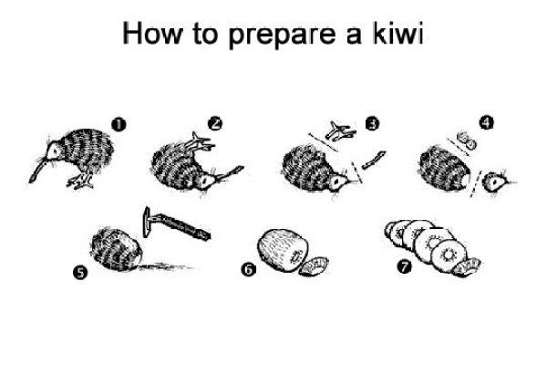 Anatomie du Kiwi