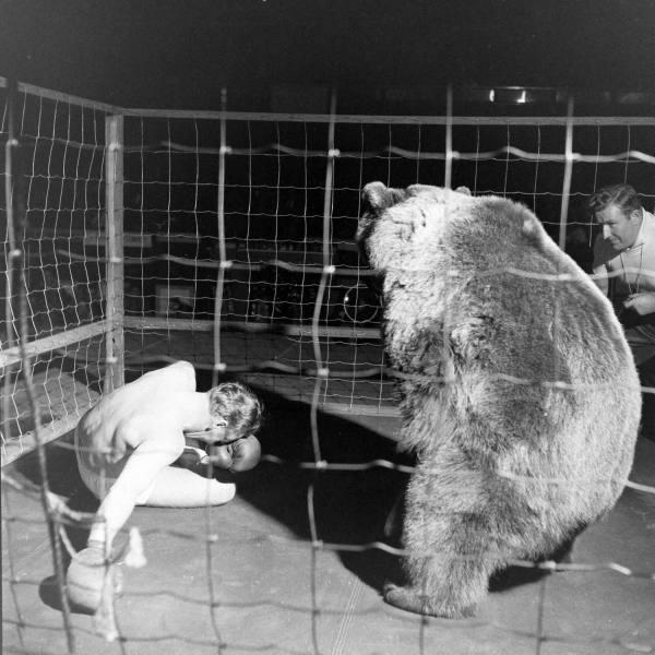 Combat de boxe entre Gus Waldorf et un ours en 1949