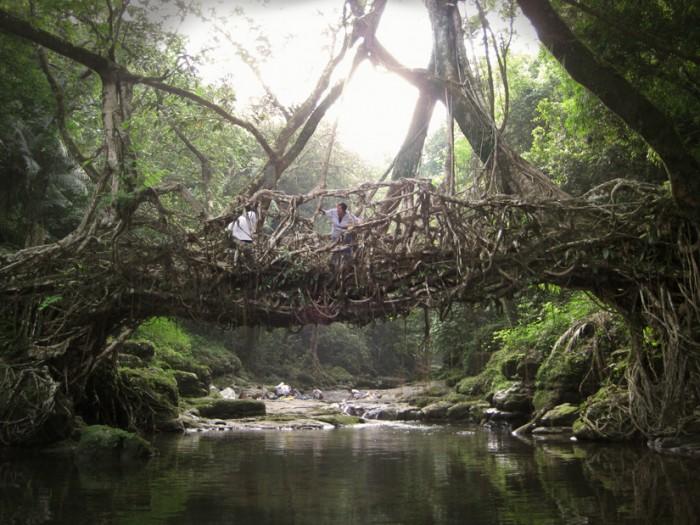 meghalaya pont racine 01 700x525 Des ponts en racines video photo lieux information a title=