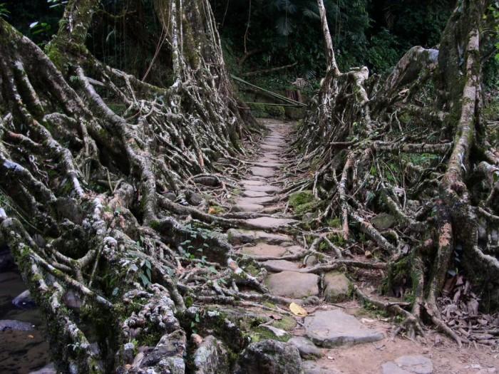 meghalaya pont racine 02 700x525 Des ponts en racines video photo lieux information a title=