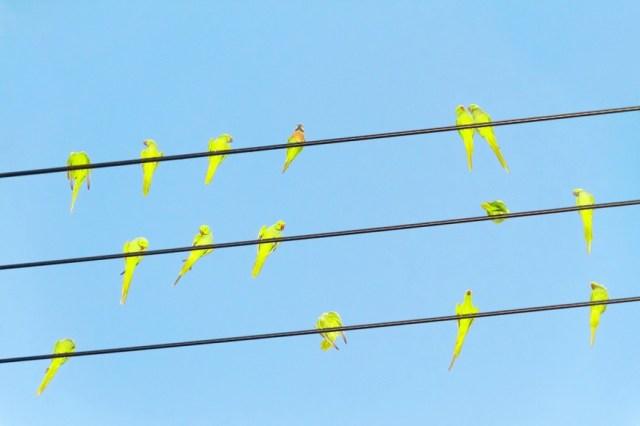 Tokyo Parrots by Yoshinori Mizutani