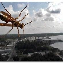 L'invasion des insectes géants