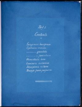 cyanotype-anna-atkins-algue-a02