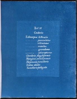 cyanotype-anna-atkins-algue-a19