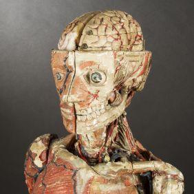 modele-anatomique-docteur-Auzoux-1820-11