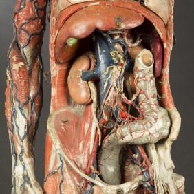 modele-anatomique-docteur-Auzoux-1820-12