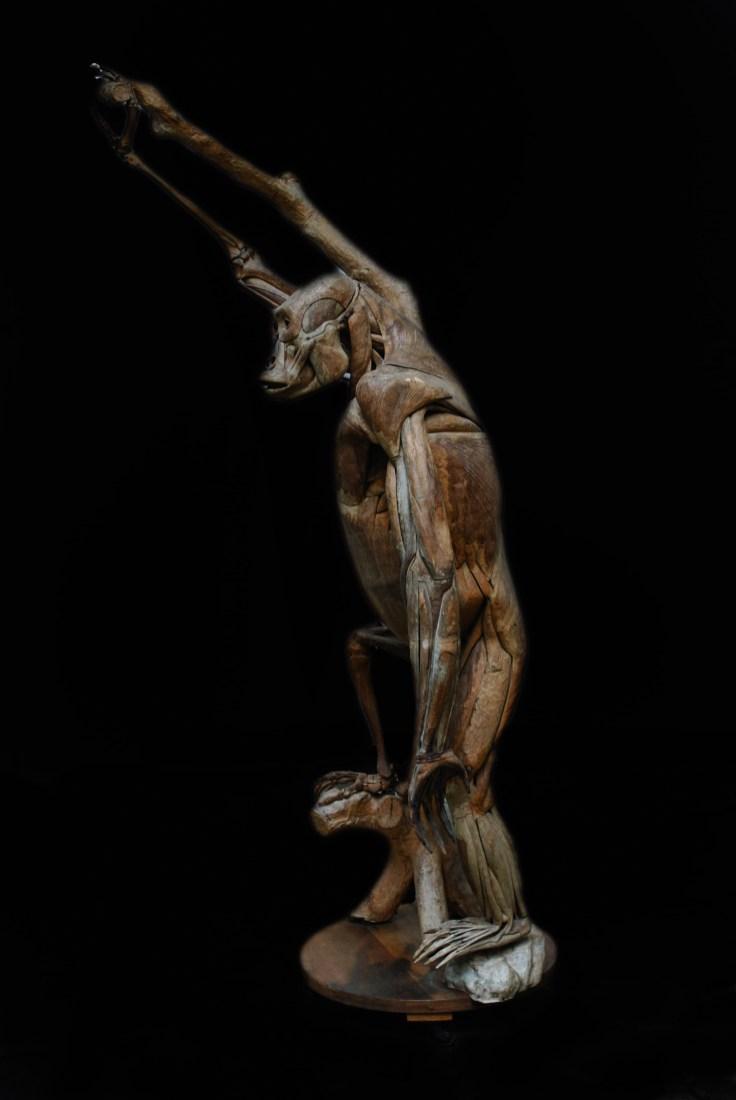 modele-anatomique-docteur-Auzoux-1820-22