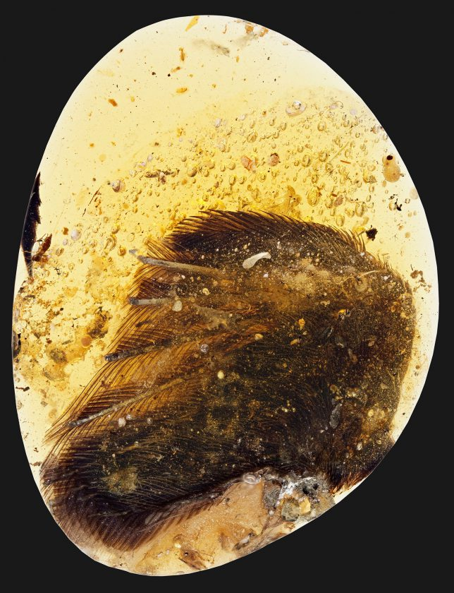 plume-ambre-dinosaure