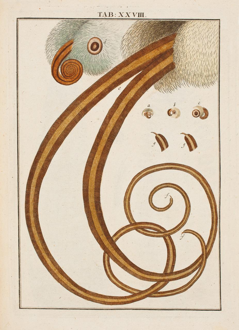 illustration-medicale-biologie-08