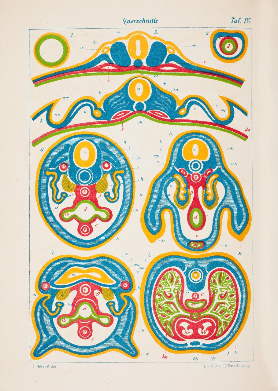 illustration-medicale-biologie-20