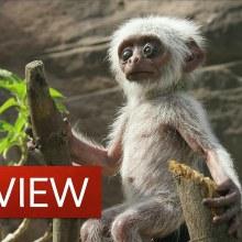 Les faux animaux robotiques qui filment les documentaires animaliers