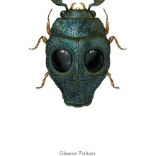Des insectes avec une apparence de Star Wars