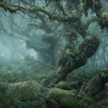 Mystical : une forêt moussue loin de l'humanité