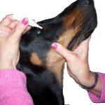 Tacrolimus collirio ad uso veterinario.