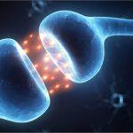 La Cannabis e le sue attività sul cervello umano.