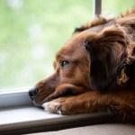 Cosa fare se il tuo cane (o gatto) è depresso?