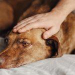 Potassio bromuro: antiepilettico veterinario