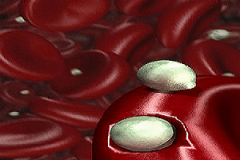 Particulas-De-Lipoproteinas