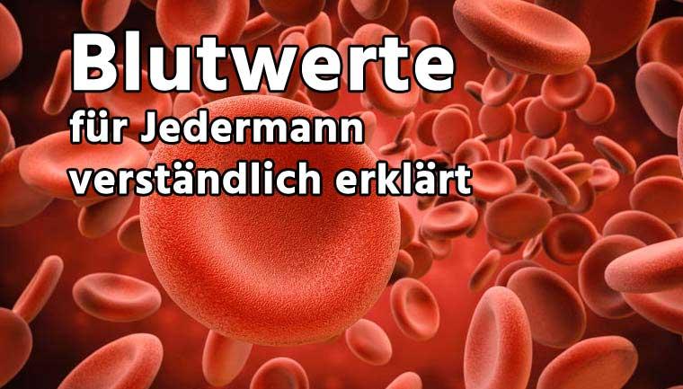 Blutbild Erklären