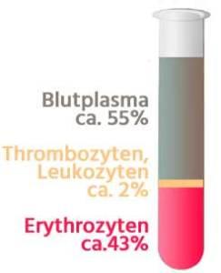kleines Blutbild und die Bestandteile für die Blutwerte