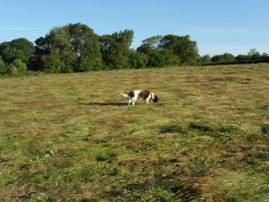 photo of a dog in the meadow