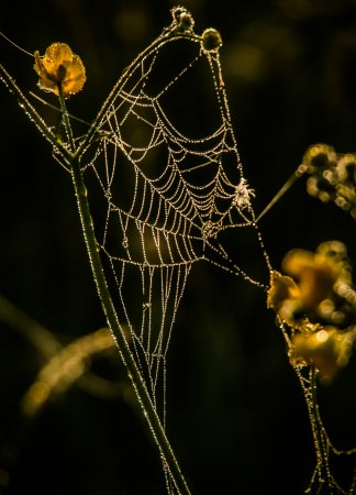 Spinnennetz im Feld 2 (1 von 1)-w1280