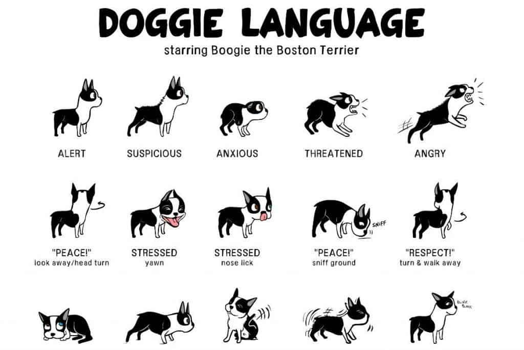 Canine body language: A lesson in understanding your Labrador