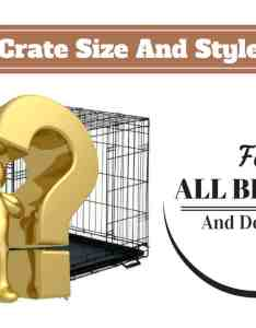 Complete guide on what size dog crate you should get and which type is best also crates to of lab cages rh labradortraininghq