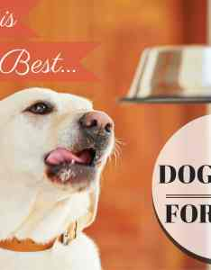 Best dog food for labradors  thorough guide also discover the types of that is your labs rh labradortraininghq