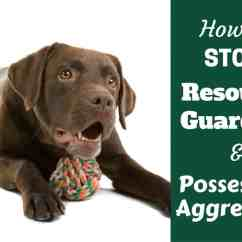 How To Stop Your Dog From Jumping Up On The Sofa Ken Jackson Sofas Cork Labrador Resource Guarding Food And