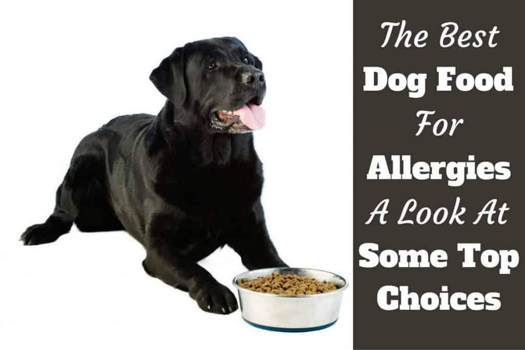 Best Dog Food Skin Allergies