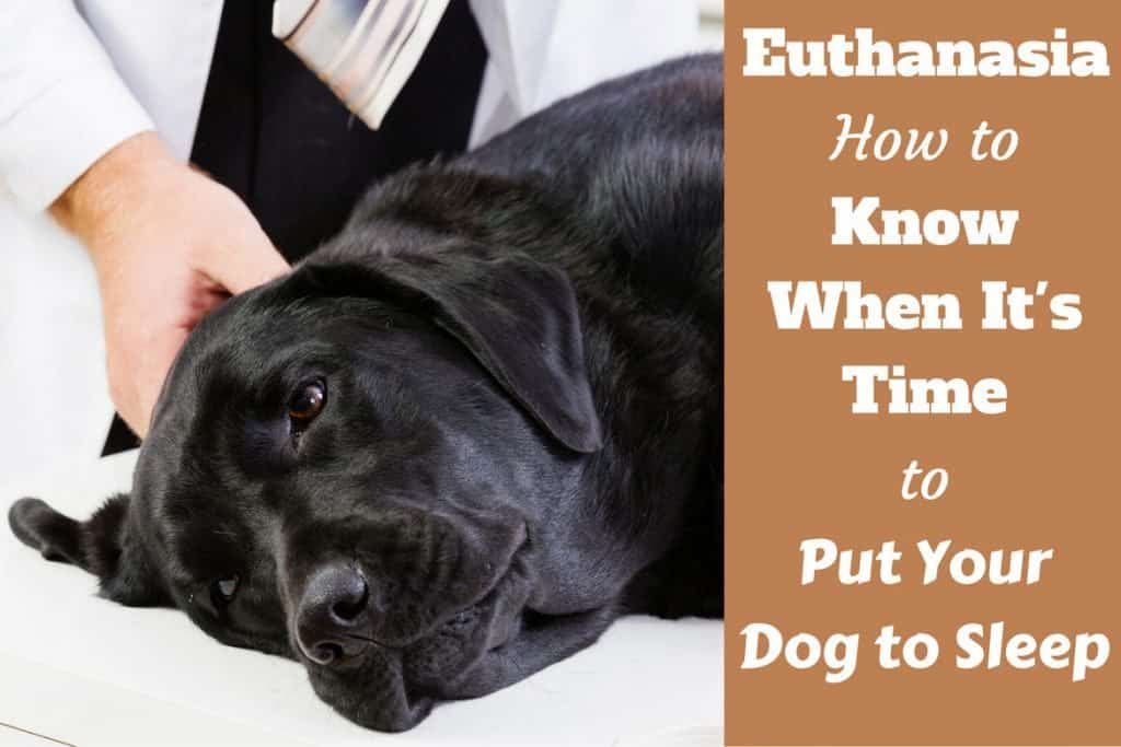 When to Put Your Dog Down: Tips How to Know It's Time to ...