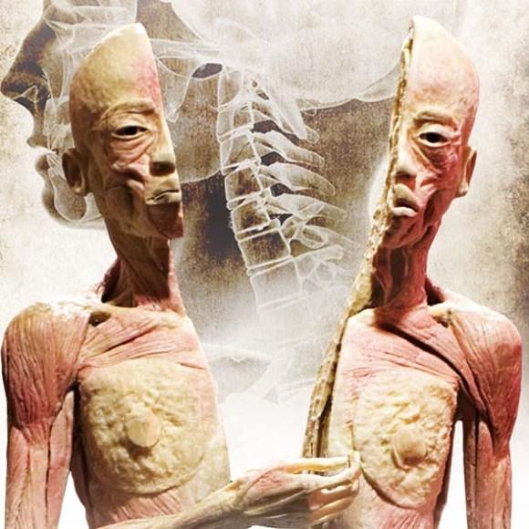 Cuerpos humanos Bilbao