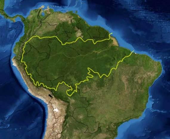 Ralentizado ritmo desforestación Amazonía
