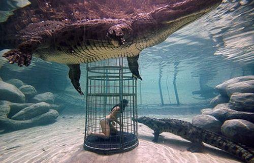 Nadando entre cocodrilos