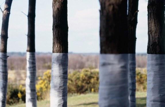 Ilusiones ópticas con árboles vendados