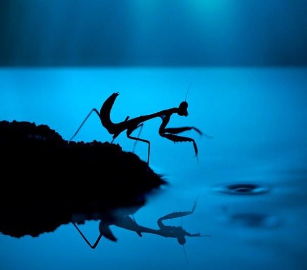 Small Small World: Increíbles fotografías de insectos