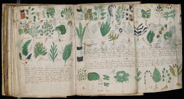 Un análisis botánico ofrece más pistas sobre el manuscrito Voynich