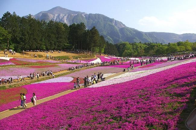Musgo-Rosa_Hitsujiyama-Park