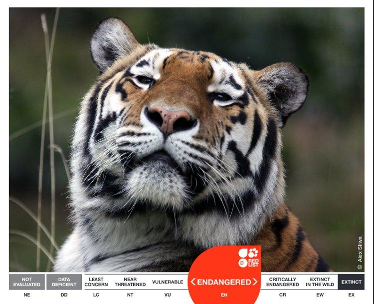 Cooperación internacional para identificar las áreas protegidas con mayor peligro de extinción 2