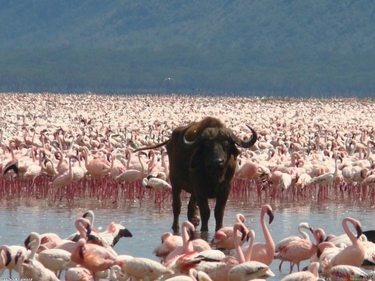 Lago Nakuru paraiso aves