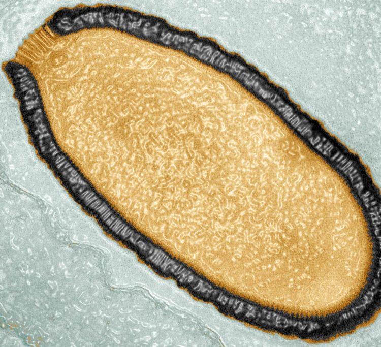 Reviven un virus gigante que estuvo congelado 30.000 años