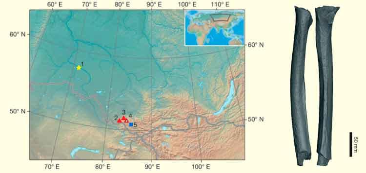 Genetistas logran secuenciar el ADN de un hombre siberiano de hace 45.000 años