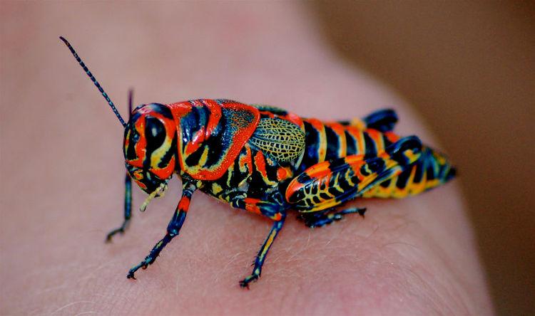 Colores sorpendentes del reino animal 4