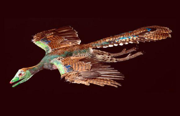 Aves perdieron dientes hace 116 millones años2