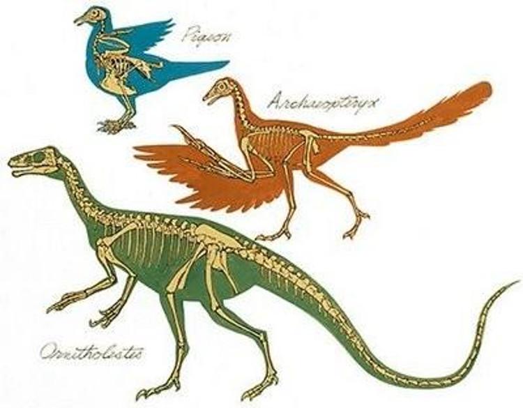 Aves perdierondientes hace 116 millones años 3