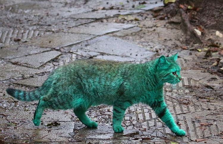 Misterio gato verde2