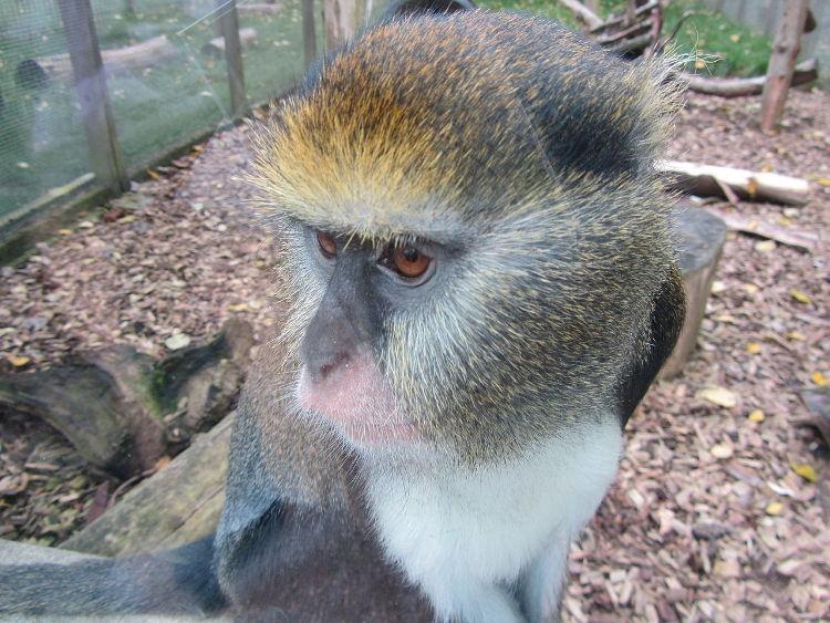 Los monos tienen su propio lenguaje e incluso dialectos locales