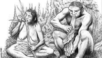 Los Neandertales repartían algunas de sus tareas diarias por sexos